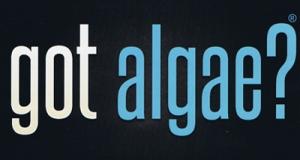 got-algae-energybits