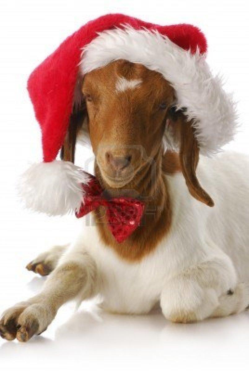 Really High Goat High Goat Memes | www....